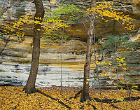 Starved Rock State Park, IL: Sandstone wall of Illinois Canyon and colors of the fall forest