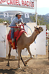 Charlie Dillon races at the International Camel Races in Virginia City, Nev., on Friday, Sept. 9, 2011. .Photo by Cathleen Allison
