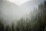 Early snow falls on Teton Pass in Jackson Hole, Wyoming.