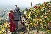 Vendemmia con elicottero nei vigneti della casa vinicola Nino Negri. Valtellina, 15 settembre, 2007<br /> <br /> Grape harvest by helicopter in the vineyards of Nino Negri wine company. Valtellina, September 15, 2007