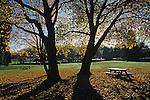 Northwest Trees and Autumn