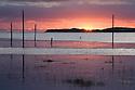 Looking over to Holy Island at sunrise, Northumberland, UK. July.