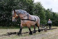 Leusden -  De Stichting Behoud Oude Werktuigen organiseert de jaarlijkse Oogstdag op landgoed Den Treek.  Paard met werktuig dat gebruikt werd bij de landbouw. Ploegen