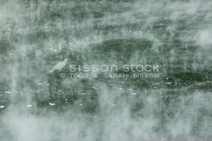 Thermal Lake and steam (close up) Waimungu Valley, Rotorua, New Zealand - stock photo, canvas, fine art print