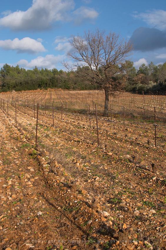 Domaine de Montcalmes in Puechabon. Terrasses de Larzac. Languedoc. Grenache grape vine variety. Terroir soil. France. Europe. Vineyard.