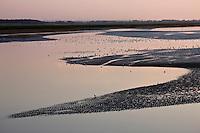 Europe/France/Picardie/80/Somme/Baie de Somme/ Le Crotoy: Paysage de la Baie de Somme