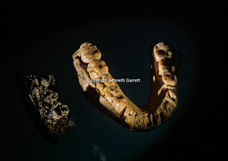5.6 million year old jaw fragment (left) is the oldest hominid fossil, found at Lothagam, 3.5 million  year old mandible from Tanzania (right), Africa