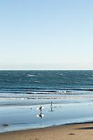Surfers at Rincon Point, near Carpinteria, California.