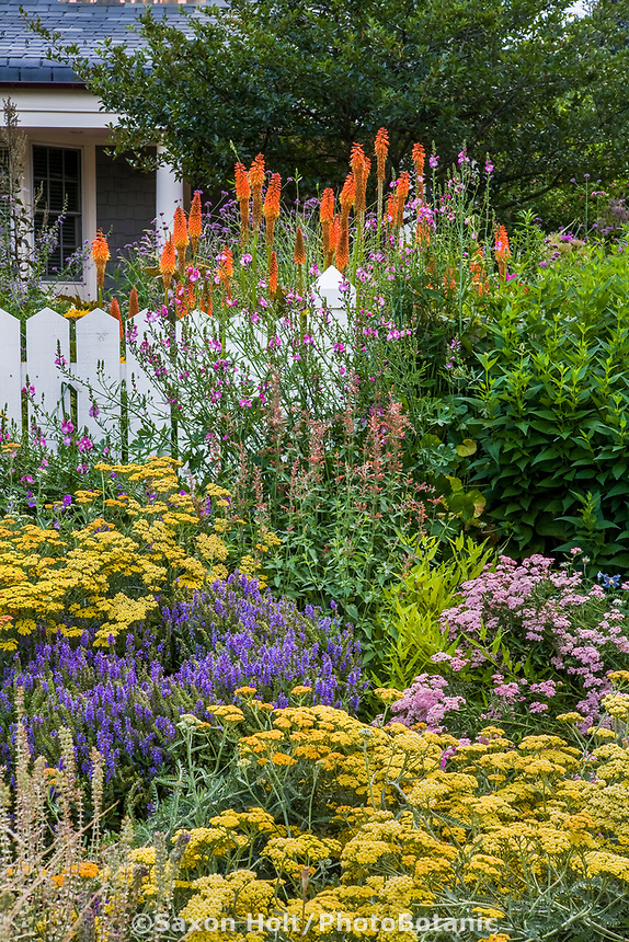 Front yard flowering cottage perennial garden with yellow Yarrow (Achilea), Salvia 'Blue Hill', Red Hot Poker (Kniphofia 'Alcazar'), Sidalcea 'Party Girl' and Agastache; design by Tom Peace