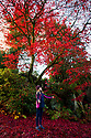 30/07/18<br /> <br /> Alice Uffindell, 10, plays with bright red leaves.<br /> <br /> Just in time for Halloween, a riot of blood red autumn colour frames the China Garden at Biddulph Grange Garden, Staffordshire.<br /> <br /> All Rights Reserved, F Stop Press Ltd. (0)1335 344240 +44 (0)7765 242650  www.fstoppress.com rod@fstoppress.com