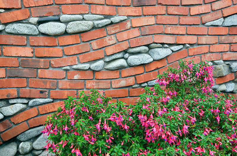 Brick and rock wall with fuchia plant. Bandon Oregon