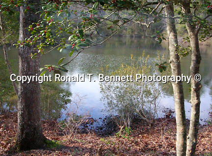 Chesapeake bay pond Commonwealth of Virginia, Fine Art Photography by Ron Bennett, Fine Art, Fine Art photography, Art Photography, Copyright RonBennettPhotography.com ©