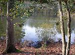Chesapeake bay pond Commonwealth of Virginia, Fine Art Photography by Ron Bennett, Fine Art, Fine Art photography, Art Photography, Copyright RonBennettPhotography.com ©