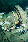A large winch drum with caves on the wreck of the S.S. Exmouth.