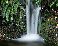 Small stream waterfall in rainforest near Fox Glacier, Westland Tai Poutini National Park, West Coast, South Westland, UNESCO World Heritage Area, New Zealand, NZ