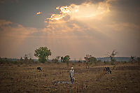 An Indian farmer stands in his parched cotton field outside the Jhatala village in Ghatanji Block, Yavatmal district in the central Indian state of Maharashtra on the 23rd of march 2011.