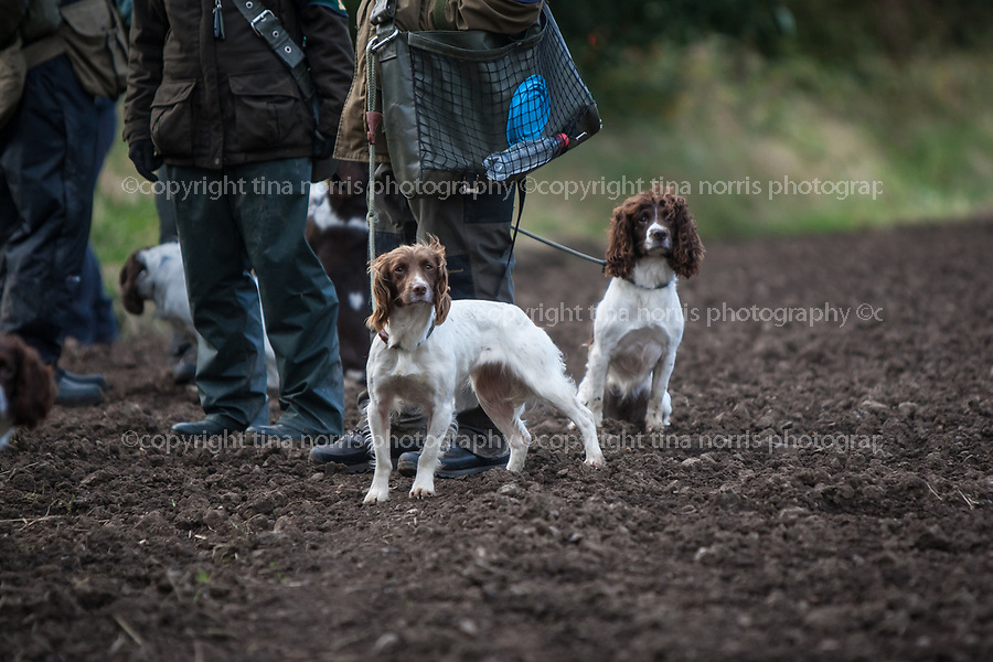 Gundog Trials, Broomhall Estate.