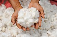 INDIA Odisha, village Kodesu, fairtrade cotton farmers of Agrocel near Rayagada, woman picks cotton / INDIEN Orissa Raygada, fairtrade Baumwollbauern von Agrocel,  Dorf Badaraising , Farmerin Sangamma Zillakara 40 Jahre