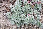 Plant Life On Orond Beach Dune