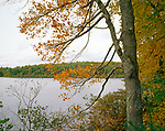 A grey fall day at Walden Pond, Concord, Massachusetts