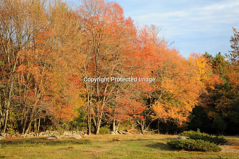 Fall Foliage along Edge of Pasture in Rural Acworth, New Hampshire USA
