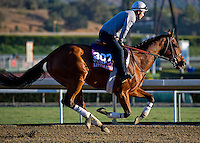 Little Mike , trained by Dale Romans, trains for the Breeders' Cup Turf at Santa Anita Park in Arcadia, California on October 30, 2013.