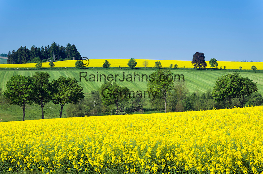 Germany, Free State of Thuringia, near Allersdorf (Herschdorf): yellow rape fields | Deutschland, Freistaat Thueringen, bei Allersdorf (Herschdorf): Rapsfelder