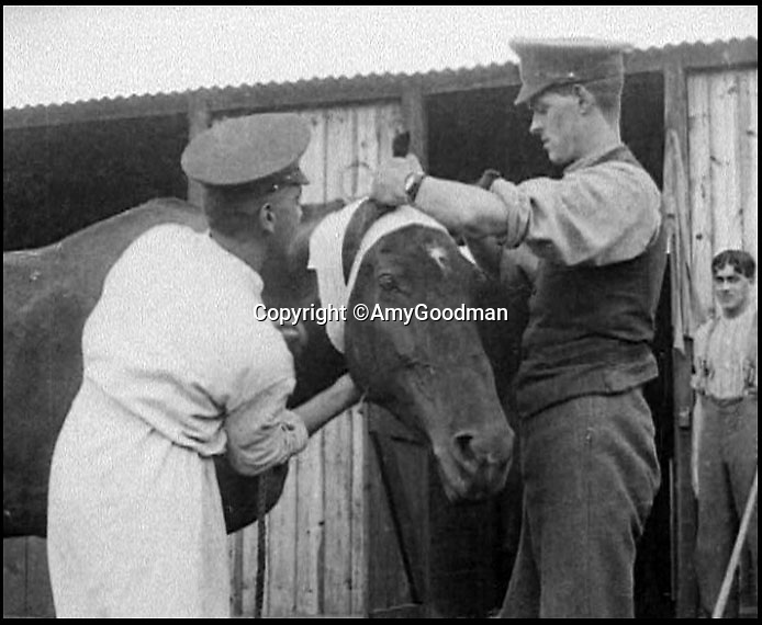 BNPS.co.uk (01202 558833)<br /> Pic: AmyGoodman/BNPS<br /> <br /> Cleveland Bays were the mainstay of horse power on the Western Front - and suffered terrible casualties.<br /> <br /> A beautiful stallion of Britain's rarest breed of horse is being immortalised in sculpture to honour their tremendous sacrifice as the war horses of the Great War.<br /> <br /> Sculptor Amy Goodman studied Icarus, a Cleveland Bay stallion, bred at the Cholderton Stud in Wiltshire to create the spectacular 10ft tall statue of the muscular horse rearing up. <br /> <br /> Described as 'Critically Endagered' by the RBST, Cholderton is the oldest stud still breeding these beautiful horses in Britain.<br /> <br /> She has used scaffolding poles, welded steel and mesh wire to make the shape of the rearing horse before covering the frame in 700kg of clay.