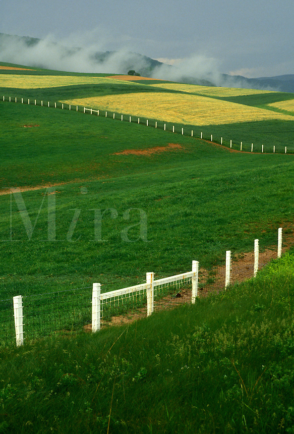 AJ2684, field, pasture, fence, Virginia, Blue Ridge, Scenic lush green fields with white fence in the countryside of Poplar Hill along Route 42 in the state of Virginia.