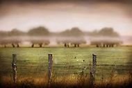 A line of fog rests on a set of trees on a farm in France at sunrise