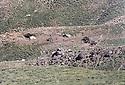 Iraq 1980.Nomads in Kalashin.Irak 1980.Camp de nomades a Kalashin