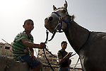 Palestinian youths clean their horse at the site of a scrap metal merchant in Al 'Eizariya (Bethany) near Jerusalem on 03/06/2010.