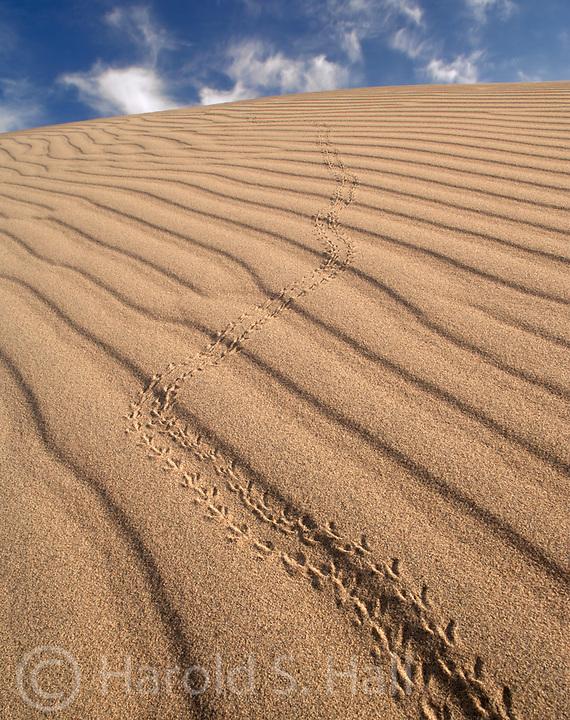 Death Valley California Sand Dunes
