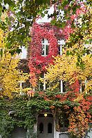 Berlino, quartiere Kreuzberg, Bergmannstraße. Una casa ricoperta di piante dai colori autunnali --- Berlin, Kreuzberg district, Bergmannstrasse. A house covered with autumn colored plants