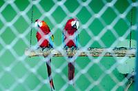 RIO DE JANEIRO,RJ, 29.12.2018 - ZOOLOGICO-RJ - Zoológico do Rio, em reforma abre para o publico. Reformas pretendem transformar o local em um bioparque, São Cristovão, Rio de Janeiro (Foto: Vanessa Ataliba/Brazil Photo Press)