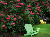 Chairs and flowering Horse Chestnut trees. Schrieners Iris Gardens. Oregon