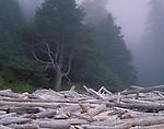 Olympic National Park, WA <br /> Jumbled driftwood logs beneath the fog enshrouded spruce, fir forest on Shishi Beach