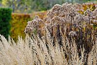 Eupatorium maculatum 'Atropurpureum' and Calamagrostis brachytricha