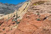 Red Rock Canyon, Nevada, Calico Tanks Trail.  Red Sandstone showing  Cross-bedding from ancient Sand Dunes, Keystone Thrust Rising in Background, Hikers on Trail.
