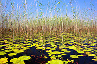 Swamps of the Okavango Delta, Botswana