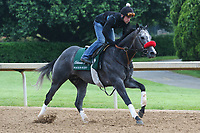 HOT SPRINGS, AR - April 14: Rockin Rudy gallops at Oaklawn Park on April 14, 2017 in Hot Springs, AR. (Photo by Ciara Bowen/Eclipse Sportswire/Getty Images)