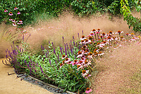 Echinacea pupurea ' Magnus' flowering in perennial border with Muhlenbergia reverchonii, Ruby muhly grass and Caradonna Sage; Sunset gardens, Cornerstone, Sonoma