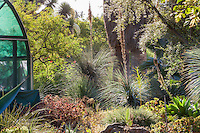 Morning light in Bancroft drought tolerant water-wise Garden with Dasylirion