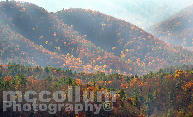 Michael McCollum<br /> 11/10/17<br /> Fall color in Cades Cove in the Great Smoky Mountains National Park, Tennessee.