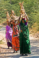 Women in colorful saris carrying firewood in rural Rajasthan.<br /> (Photo by Matt Considine - Images of Asia Collection)