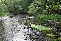 Bach, Tiefland-Bach, Naturnaher Bachlauf, Fluß, Fluss, Warnow, Mecklenburg-Vorpommern. Brook, rivulet, stream