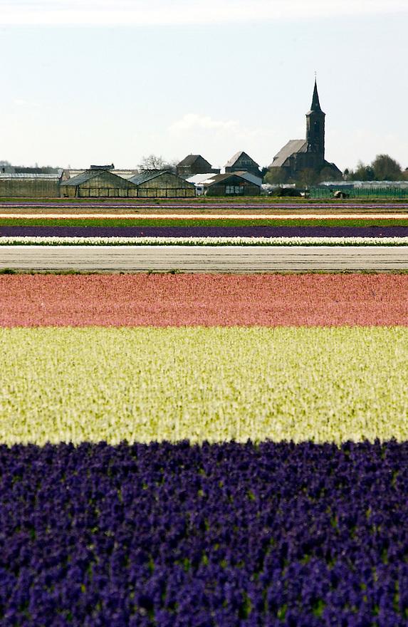 Nederland, Hillegom,  12 april 2004.Bloembollenvelden in de buurt van Lisse. Tulpen, bollen, bloemen, ..Foto (c) Michiel Wijnbergh/HH