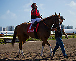 HALLANDALE BEACH, FL - JANUARY 27: Javier Castellano, aboard Girls Know Best #1, celebrates after  winning the Ladies' Turf Sprint Stakes on Pegasus World Cup Invitational Day at Gulfstream Park Race Track on January 27, 2018 in Hallandale Beach, Florida. (Photo by Kazushi Ishida/Eclipse Sportswire/Getty Images)