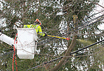 Tree Service Crews work on restoring power in Chatham, New Jersey