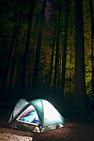 Tent glowing below trees, Mora Campground, Olympic National Park, Olympic Peninsula, Clallam County, Washington, USA